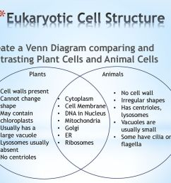 eukaryotic cell structure [ 1024 x 768 Pixel ]