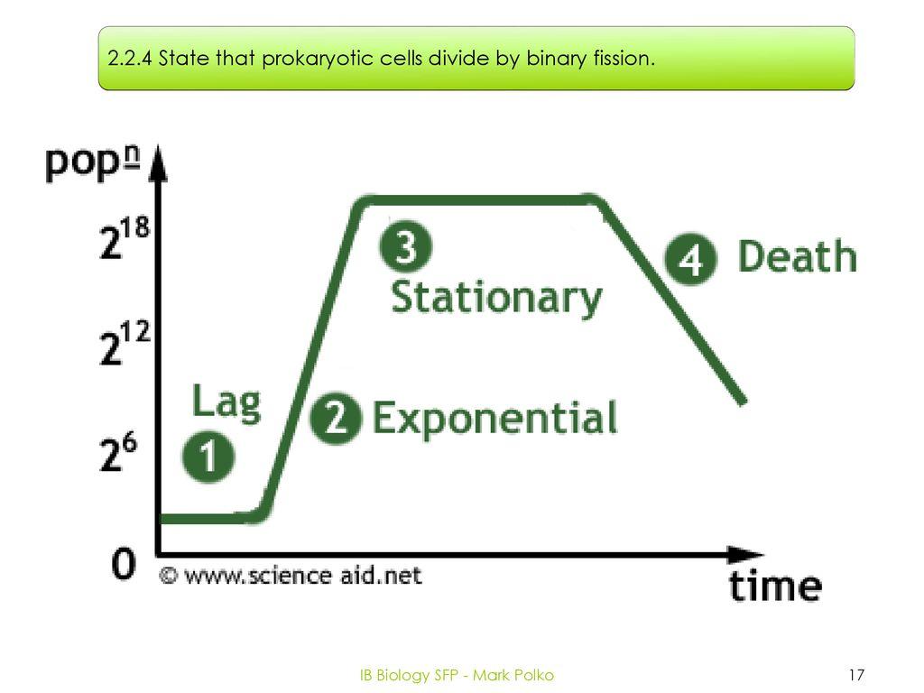hight resolution of ib biology sfp mark polko
