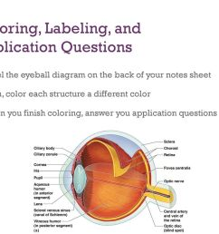 coloring labeling and application questions [ 1024 x 768 Pixel ]