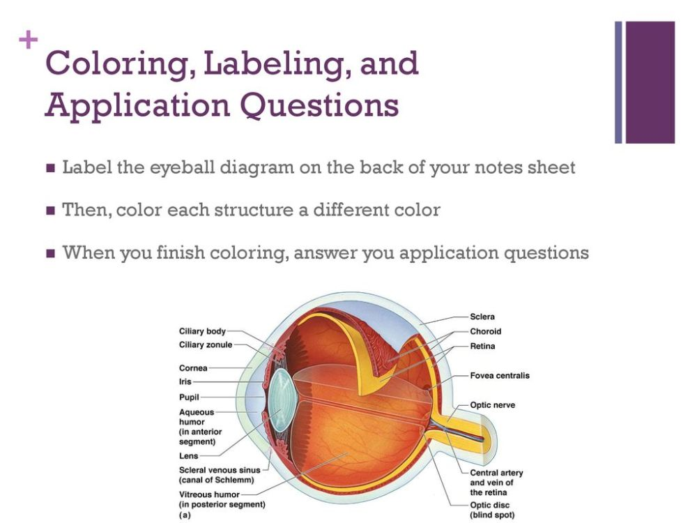 medium resolution of coloring labeling and application questions