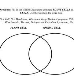 plant cell and animal cell venn diagram compare cell organelles and structures ppt download  [ 1024 x 768 Pixel ]