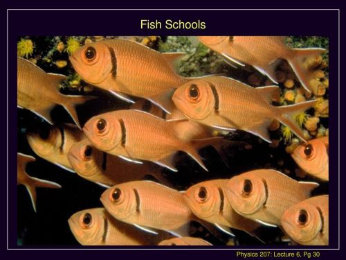 small resolution of physics 207 lecture 6 sept 24 agenda chapter 5 ppt download draw a freebody diagram for a goldfish physics