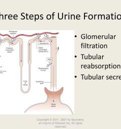 three steps of urine formation [ 1024 x 768 Pixel ]