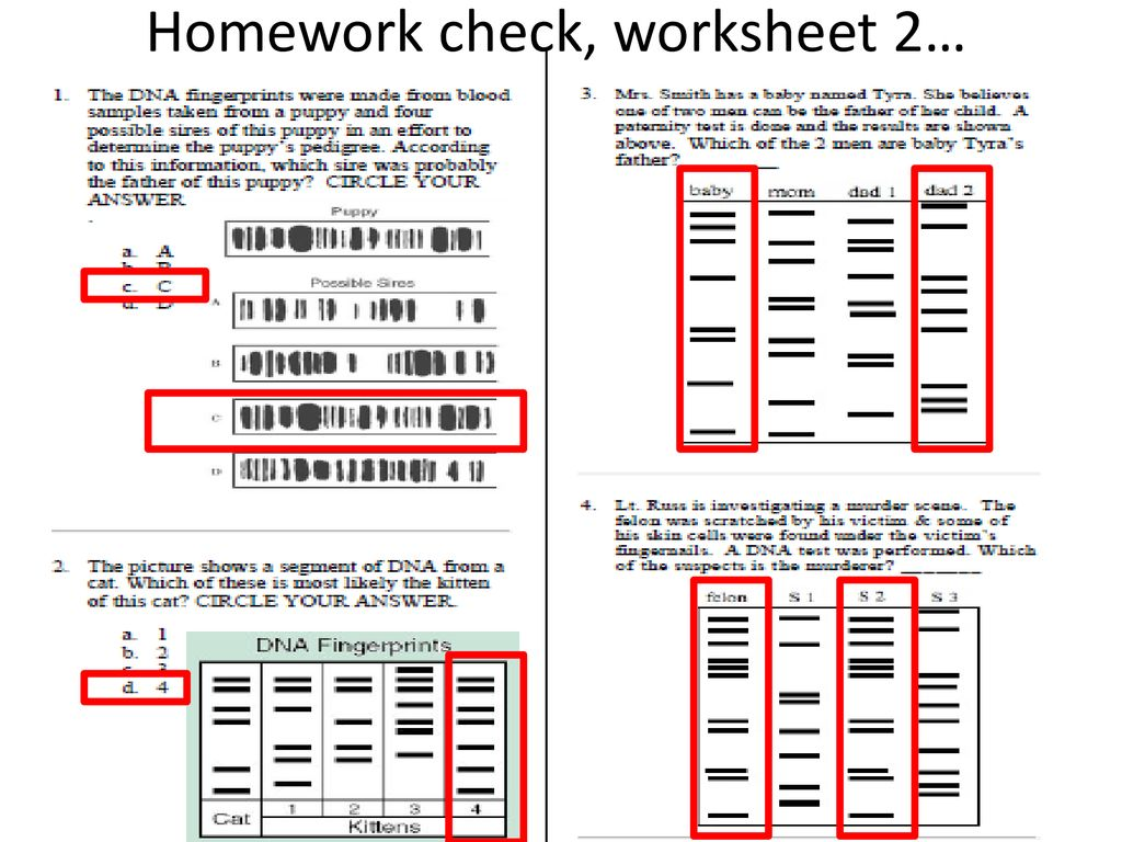Bestseller Fingerprint Challenge Worksheet Answers