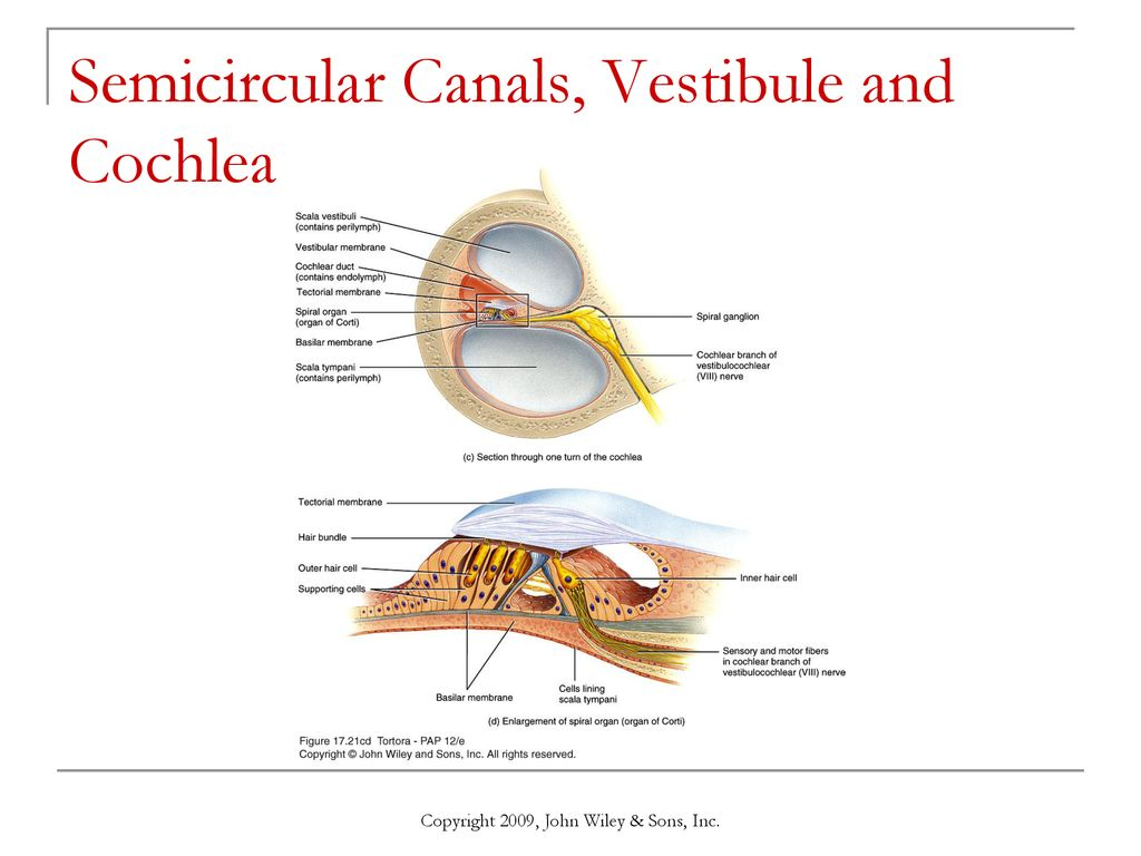 hight resolution of semicircular canals vestibule and cochlea