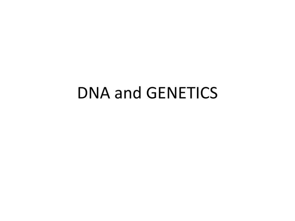 medium resolution of 4 dna and genetics