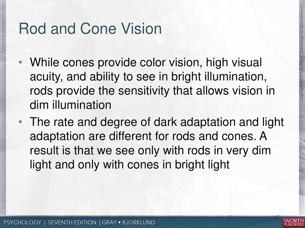 hight resolution of rod and cone vision