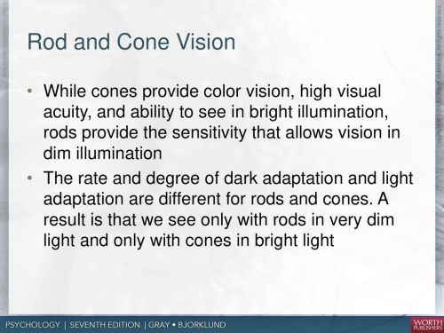 small resolution of rod and cone vision