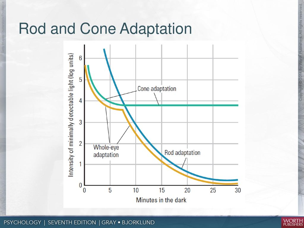 hight resolution of rod and cone adaptation