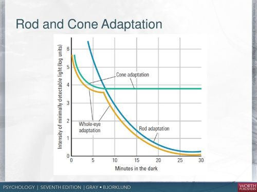 small resolution of rod and cone adaptation