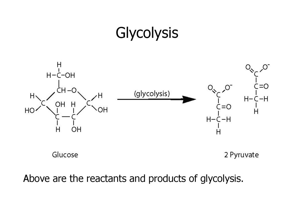 hight resolution of 30 glycolysis