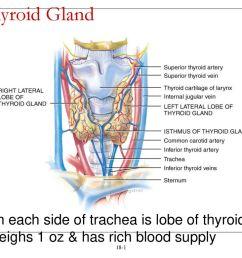 thyroid gland on each side of trachea is lobe of thyroid [ 1024 x 768 Pixel ]