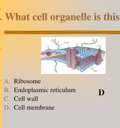 what cell organelle is this [ 1024 x 768 Pixel ]