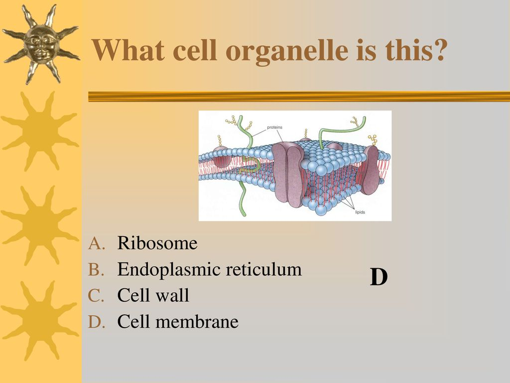 hight resolution of what cell organelle is this