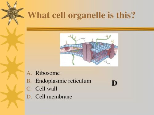 small resolution of what cell organelle is this