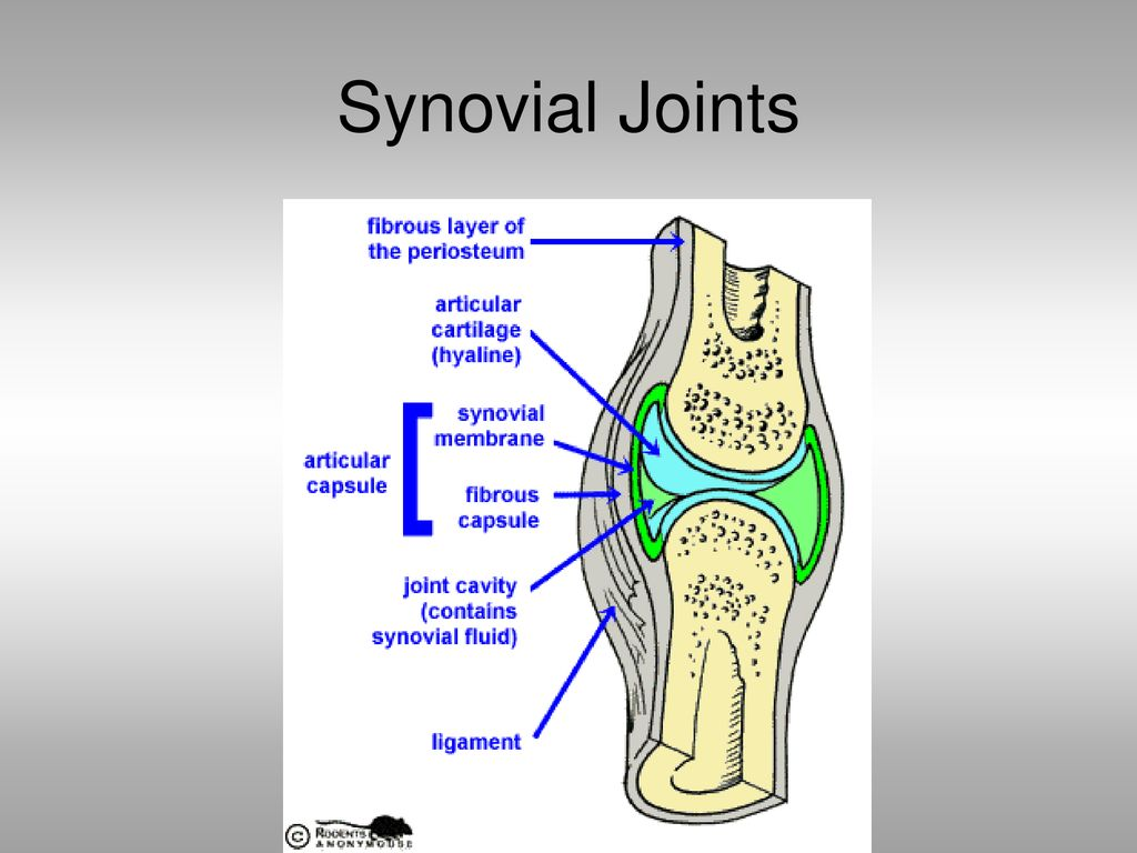 hight resolution of 11 synovial joints