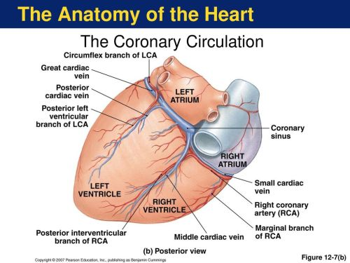 small resolution of the anatomy of the heart