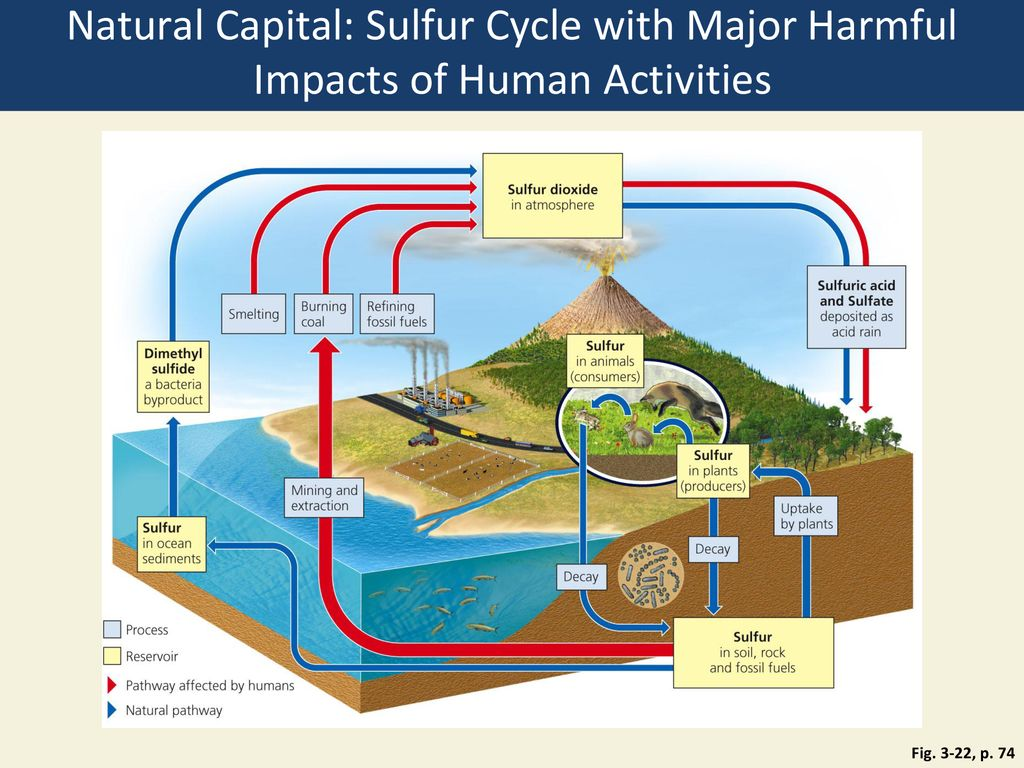 hight resolution of natural capital sulfur cycle with major harmful impacts of human activities