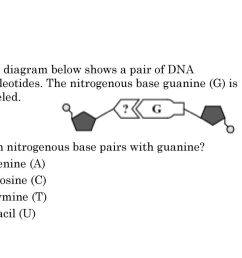 5 the diagram below shows a pair of dna nucleotides the nitrogenous base guanine [ 1024 x 768 Pixel ]