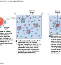 figure 2 9 water molecules surround solutes in aqueous solutions  [ 1024 x 768 Pixel ]