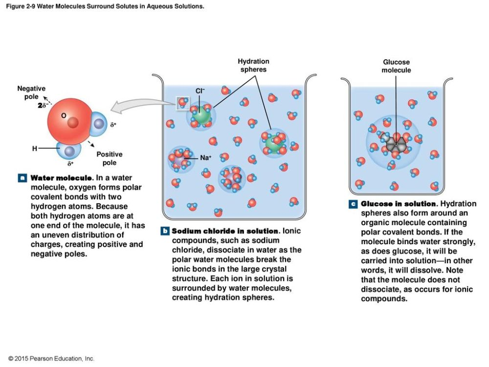 medium resolution of figure 2 9 water molecules surround solutes in aqueous solutions
