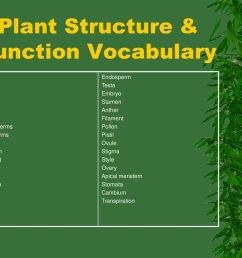 plant structure function vocabulary [ 1024 x 768 Pixel ]