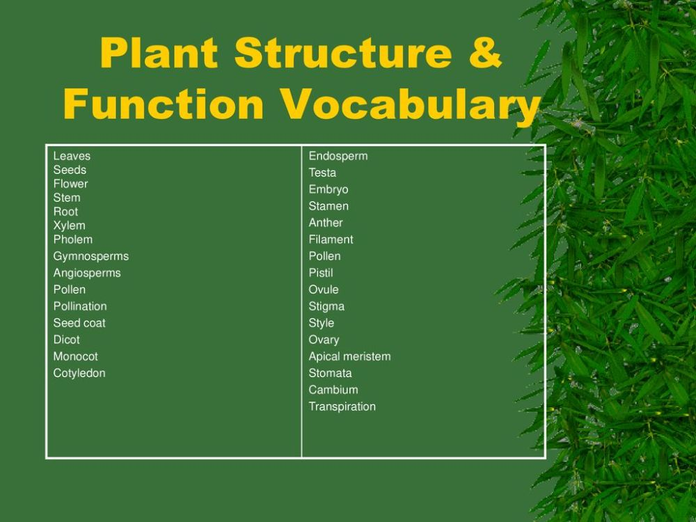 medium resolution of plant structure function vocabulary