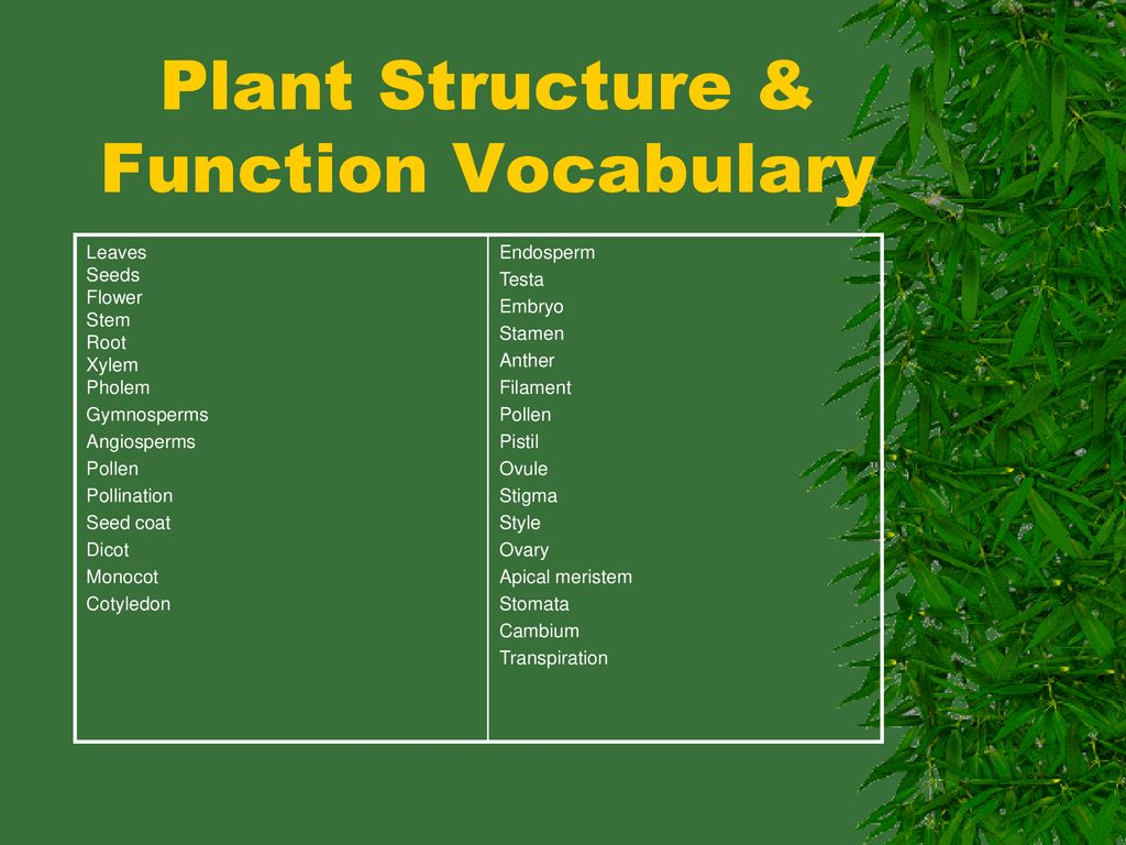hight resolution of plant structure function vocabulary