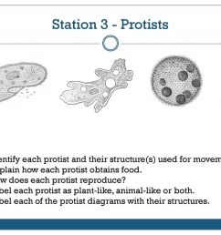 station 3 protists identify each protist and their structure s used for movement [ 1024 x 768 Pixel ]