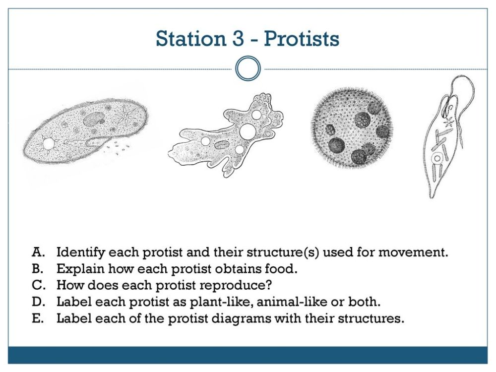 medium resolution of station 3 protists identify each protist and their structure s used for movement