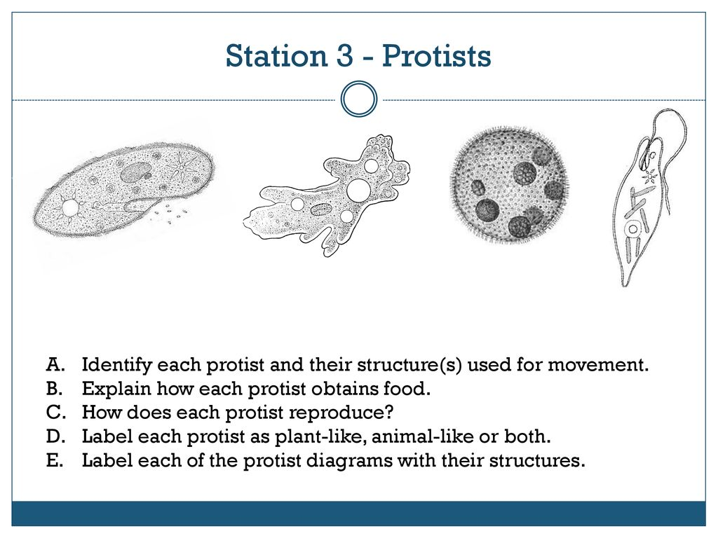 hight resolution of station 3 protists identify each protist and their structure s used for movement