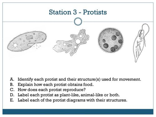 small resolution of station 3 protists identify each protist and their structure s used for movement