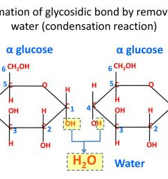 formation of glycosidic bond by removal of water condensation reaction  [ 1024 x 768 Pixel ]