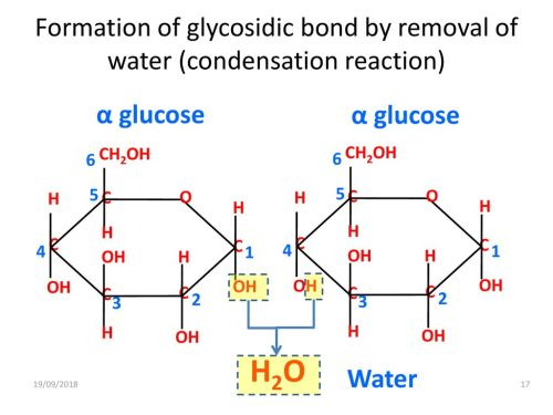 small resolution of formation of glycosidic bond by removal of water condensation reaction