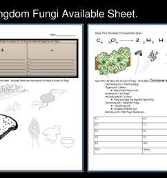 48 kingdom fungi available sheet  [ 1024 x 768 Pixel ]