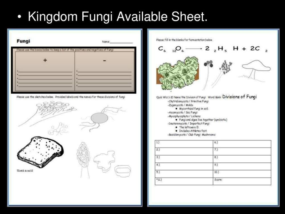 medium resolution of 48 kingdom fungi available sheet