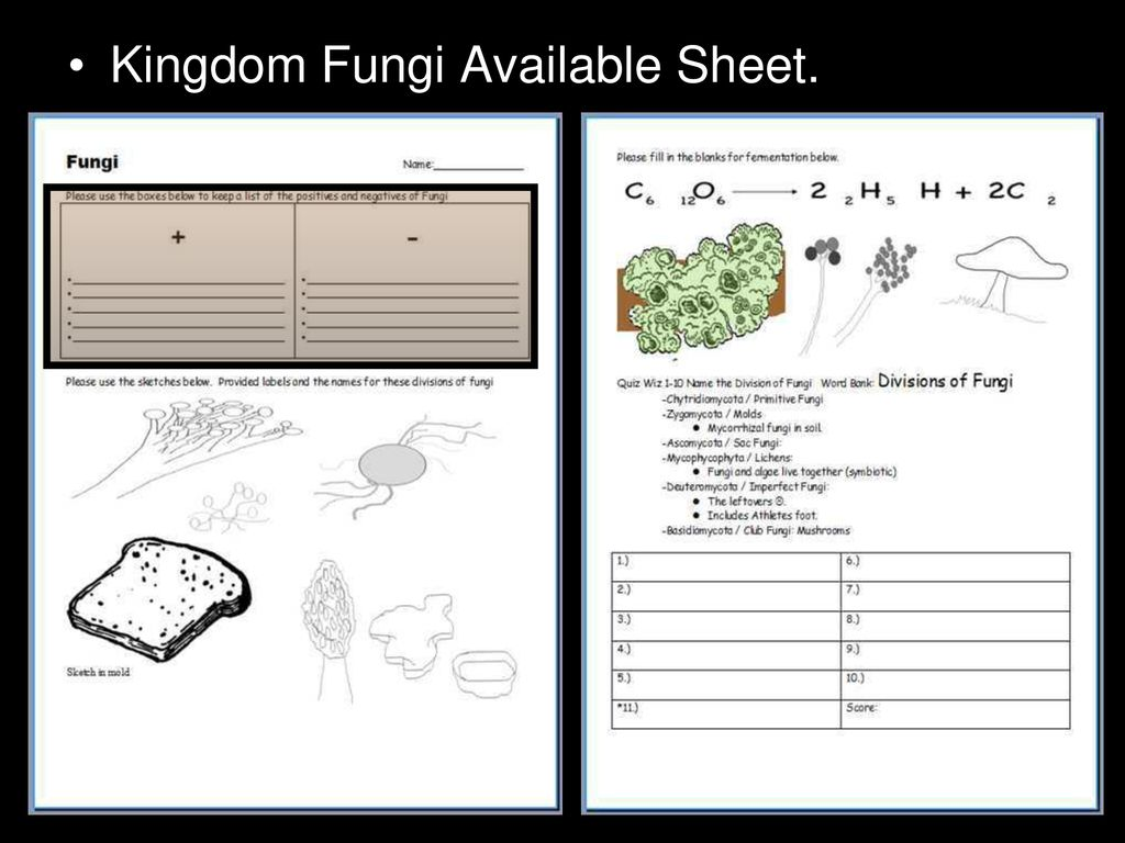 hight resolution of 48 kingdom fungi available sheet
