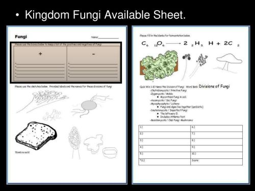 small resolution of 48 kingdom fungi available sheet