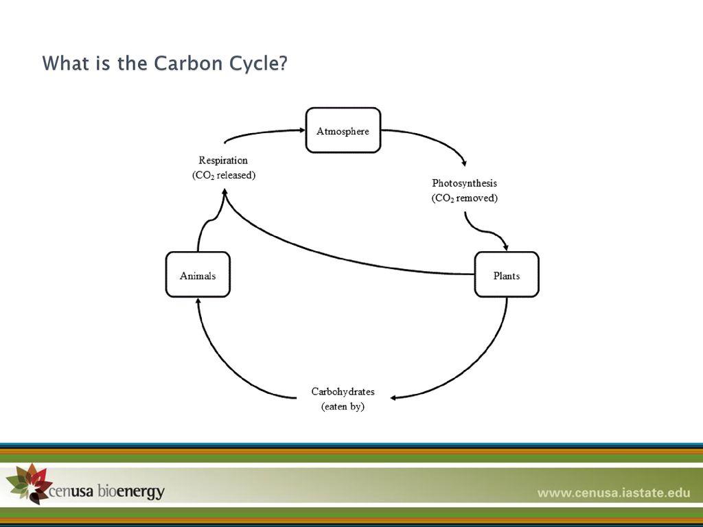 Carbon Cycle Worksheet High School