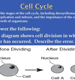 cell cycle answer the following  [ 1024 x 768 Pixel ]