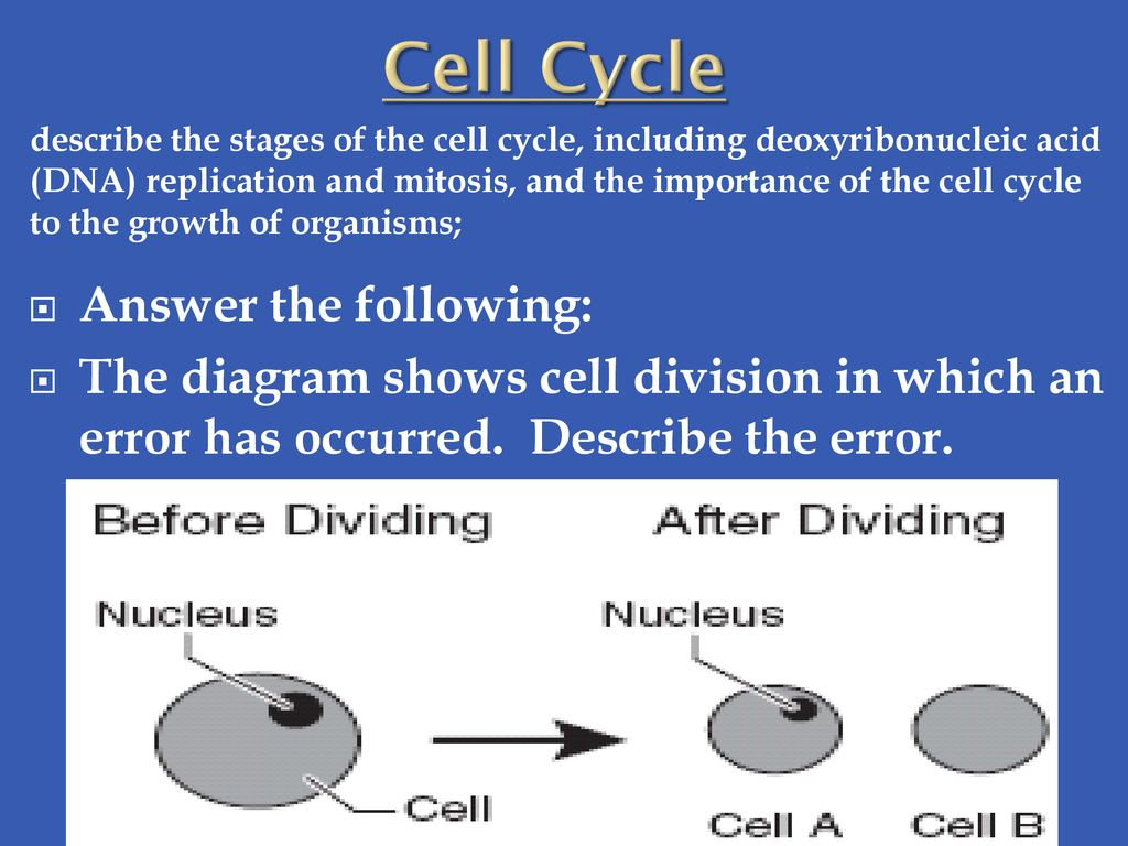 hight resolution of cell cycle answer the following
