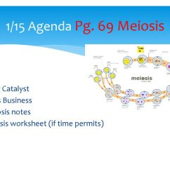1/15 Daily Catalyst Pg. 69 Meiosis - ppt download [ 768 x 1024 Pixel ]