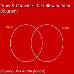 Venn Diagram Comparing Dna And Rna 1998 Bluebird Bus Wiring 1 Basics 2 Structure Function 3 Draw Complete The Following