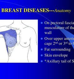 6 breast diseases anatomy [ 1024 x 768 Pixel ]