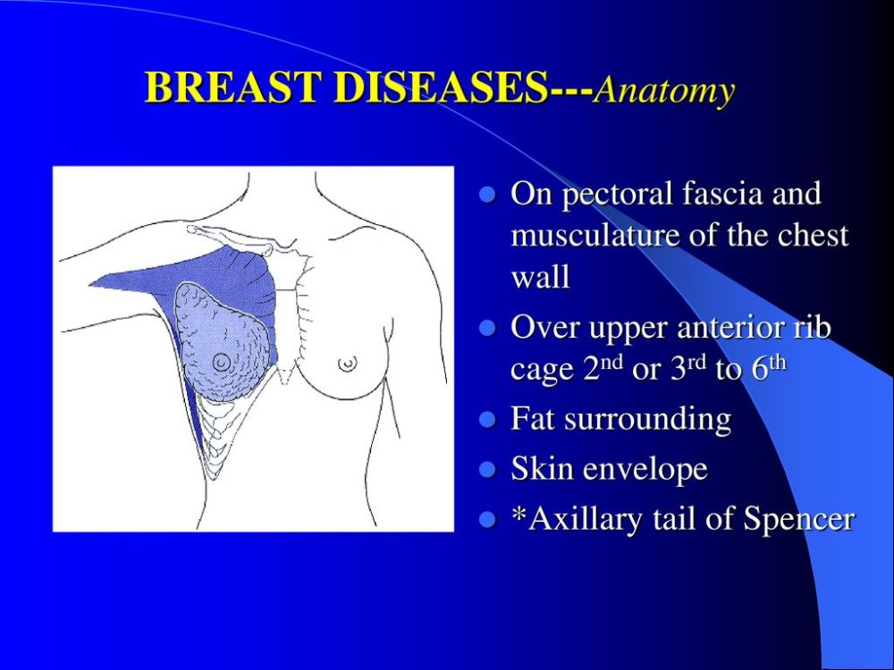 medium resolution of 6 breast diseases anatomy