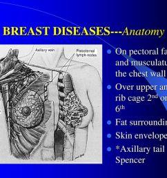 7 breast diseases anatomy [ 1024 x 768 Pixel ]