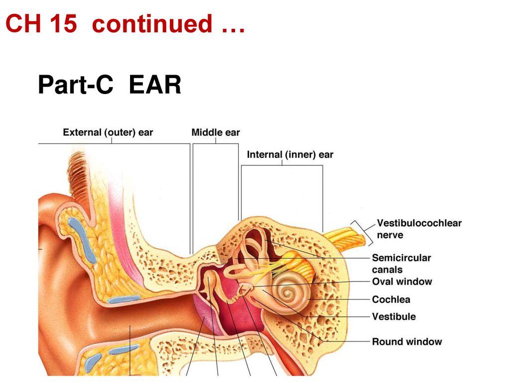 hight resolution of part c ear