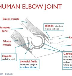 elbow diagram ib wiring diagram centreelbow diagram ib [ 1024 x 768 Pixel ]