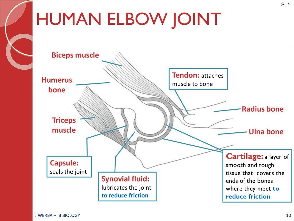 hight resolution of elbow diagram ib wiring diagram centreelbow diagram ib