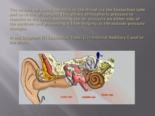 small resolution of the middle ear cavity connects to the throat via the eustachian tube and so to the